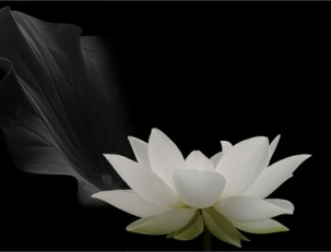 Белый цвет – сочетание, психология, символика